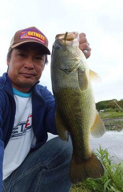 オカッパリでネコリグ釣れる 5月15日.JPG