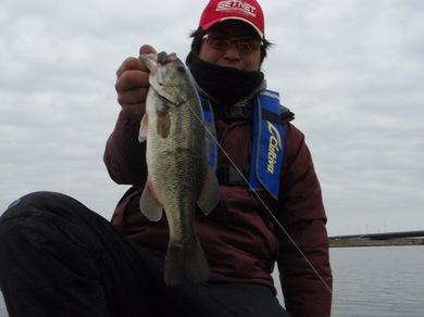 冬の利根川で釣れる.JPG