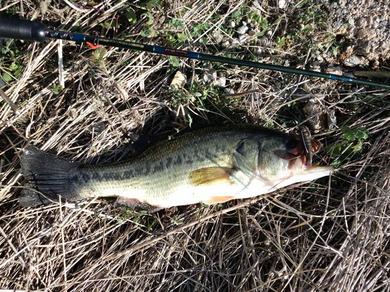 冬の野池で釣れるジャスターホッグ43のテキサスリグ.jpg
