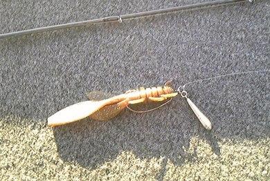 冬の霞で釣れる直リグ.jpg