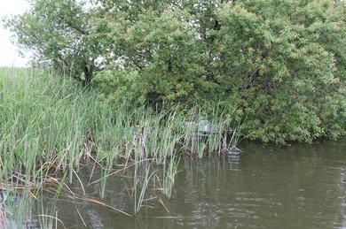 小貝川で釣れる場所.JPG