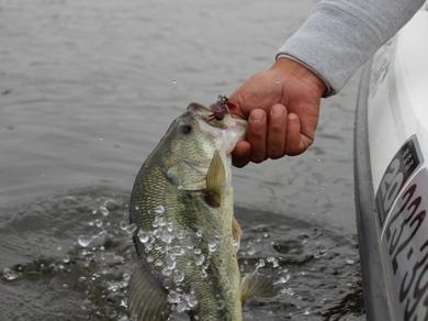 小貝川で釣れる直リグ 6月5日.JPG
