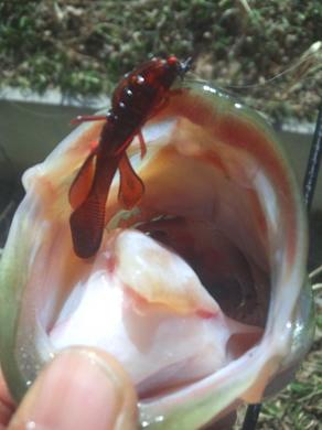 春の野池で釣れるワーム.jpg