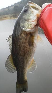 春の野池のオカッパリで釣れる.jpg
