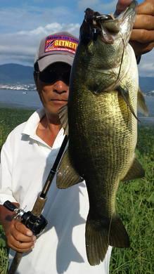 東岸オカッパリで釣れる 9月15日.jpg