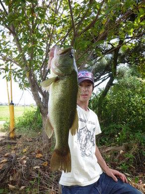 東幡で釣れる野池 9月19日.JPG