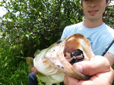 東幡野池で釣れるワームはジャスターホッグ 6月26日.JPG