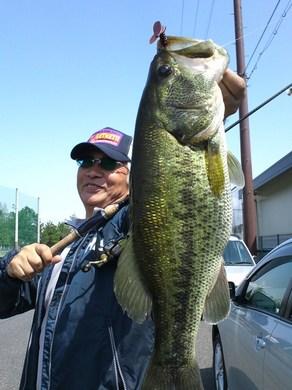 水路で釣れる、ジャスターホッグ23 4月23日.JPG