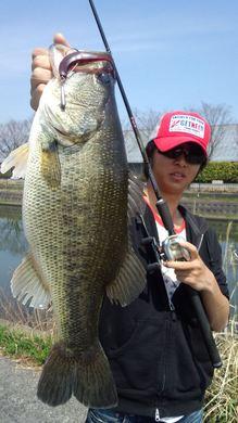 水路で釣れるリグ 4月19日.jpg