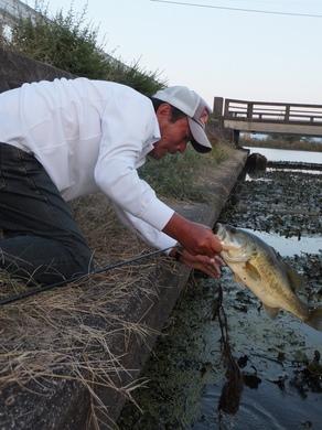 琵琶湖で岸から釣れる.JPG