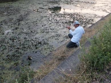 琵琶湖で岸釣り釣れる.JPG