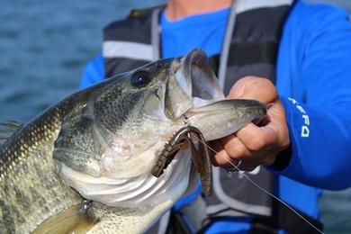 琵琶湖で釣れるワーム.JPG