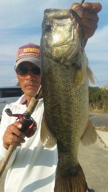 琵琶湖のオカッパリで釣れる 10月26日.jpg
