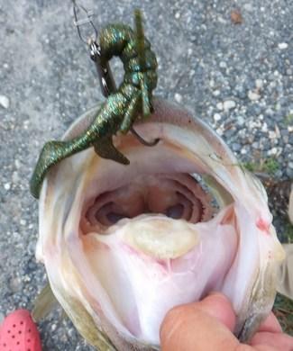 琵琶湖のオカッパリで釣れるルアー 9月6日.jpg