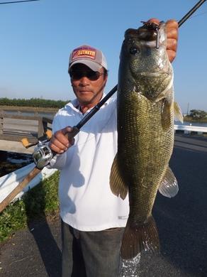 琵琶湖オカッパリでデカバス釣れる.JPG