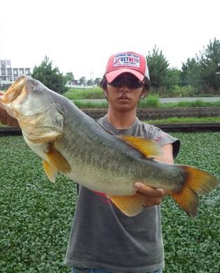 琵琶湖オカッパリでロクマル釣れる 9月14日.jpg