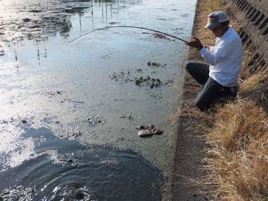 琵琶湖オカッパリで釣れる.JPG