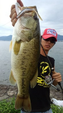 琵琶湖オカッパリで釣れる フィッシュ4、5ネイルリグ 51cm.jpg