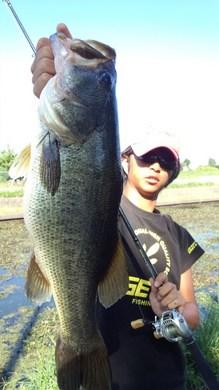 琵琶湖オカッパリで釣れる 54cm 10月9日.jpg