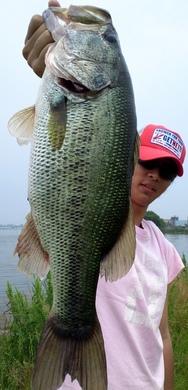 琵琶湖オカッパリで50UPが釣れる 5月29日.JPG