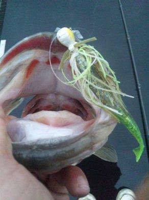 琵琶湖オカッパリで50UPを釣るルアー.jpg