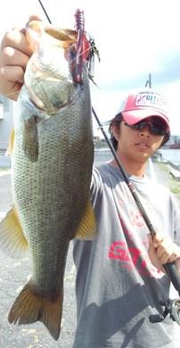琵琶湖オカッパリ釣れる1010 40UP.jpg