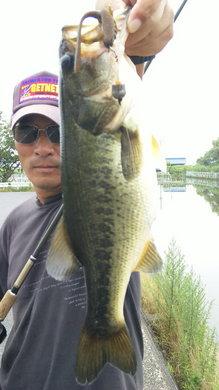 琵琶湖水路で釣れる.jpg