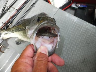 相模湖で釣れるワーム 6月8日.JPG