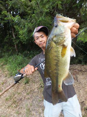 野池で釣れるチャター.JPG