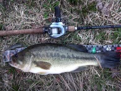 野池で釣れるデカバス ジャスターフィッシュ55.jpg