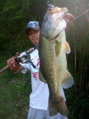 野池で釣れるルアーはジャスターフィッシュ 9月22日.jpg