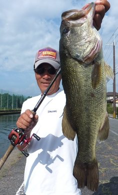 54cm 琵琶湖オカッパリで釣れる 10月10日.JPG