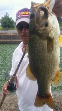 8月15日 水路で釣れる.jpg